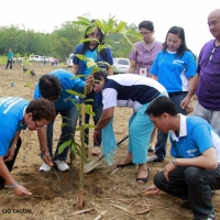 Reforestation intensified