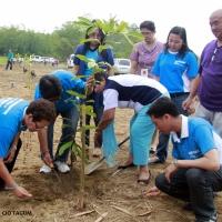 Reforestation intensified
