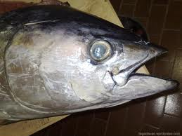 YELLOWFIN 5