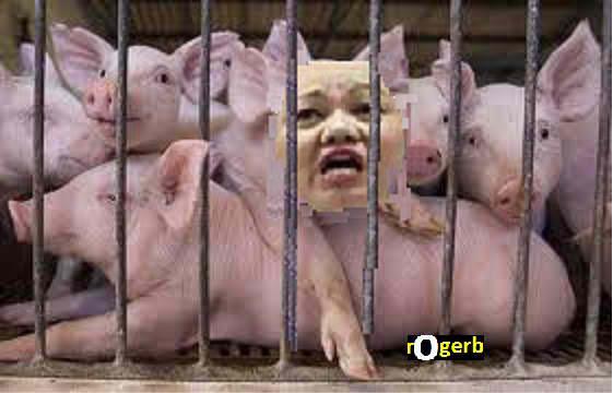 pig napoles