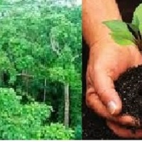 MASSIVE REFORESTATION SET IN 200 MINDANAO VILLAGES