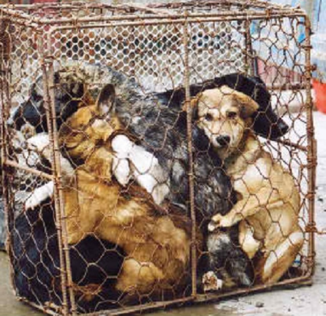 dog-meat-1