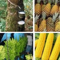 MINDANAO AGRICULTURE STRONG DESPITE CALAMITIES