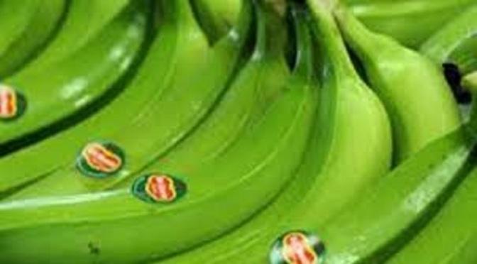 EXPORT PHILIPPINE BANANAS going bananas