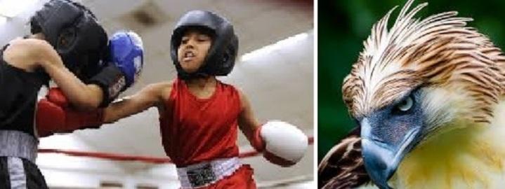 nonoy boxing