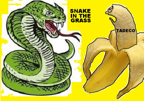 SNAKE IN THE GRASS