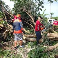 DAVAO DEL NORTE PhotoNews: Strong winds and felled trees in Sto. Tomas rown